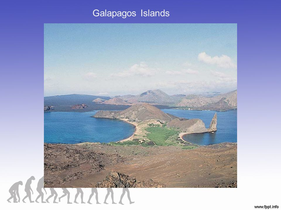 Galapagos Islands Figure 21.00