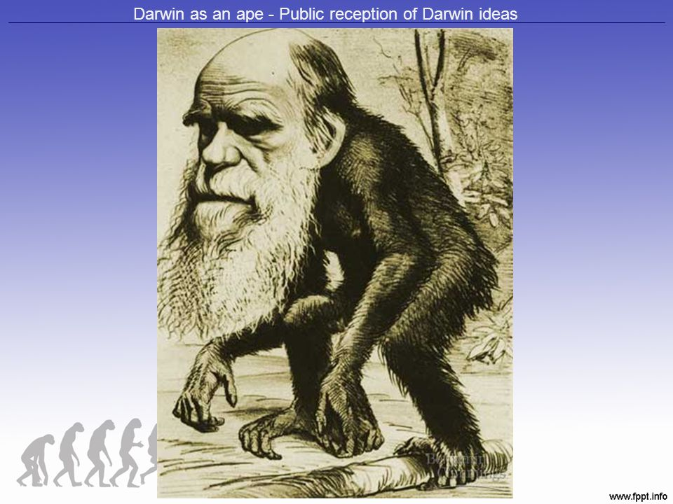 Darwin as an ape - Public reception of Darwin ideas
