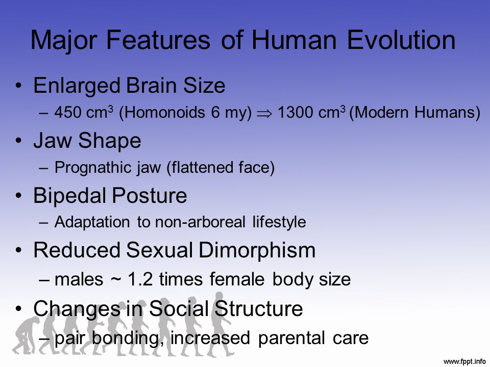 Major Features of Human Evolution