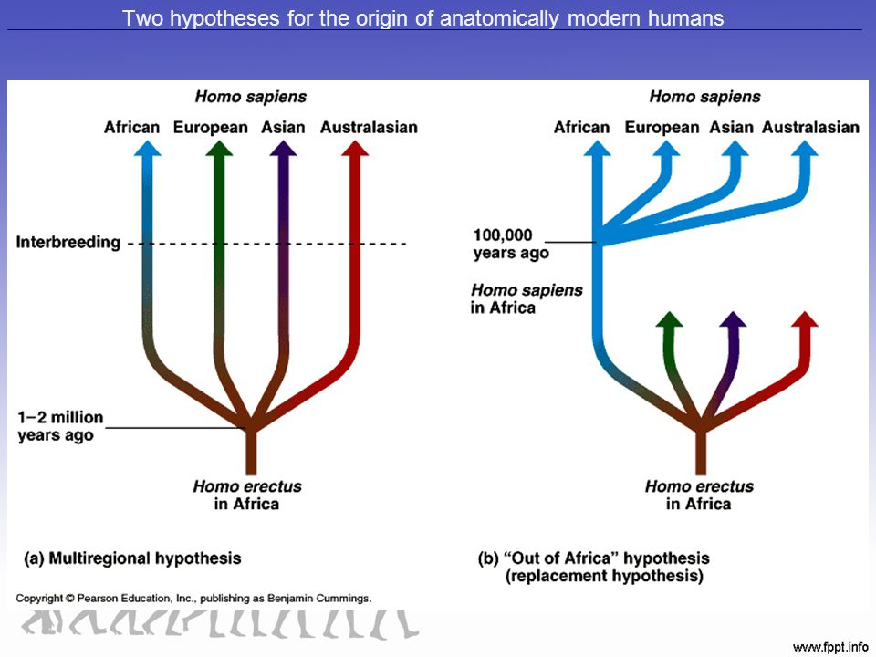 Two hypotheses for the origin of anatomically modern humans