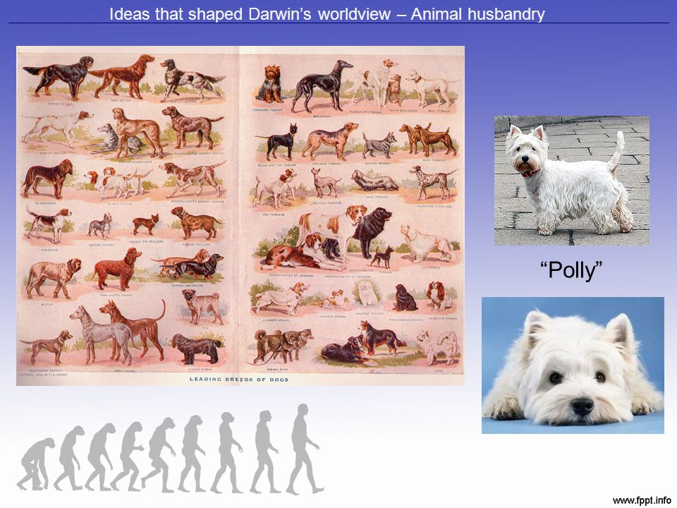 Ideas that shaped Darwin's worldview – Animal husbandry