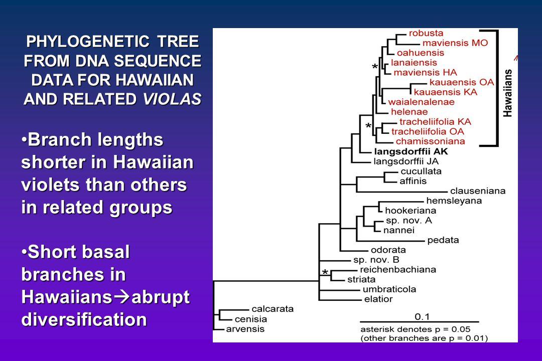 Short basal branches in Hawaiiansabrupt diversification