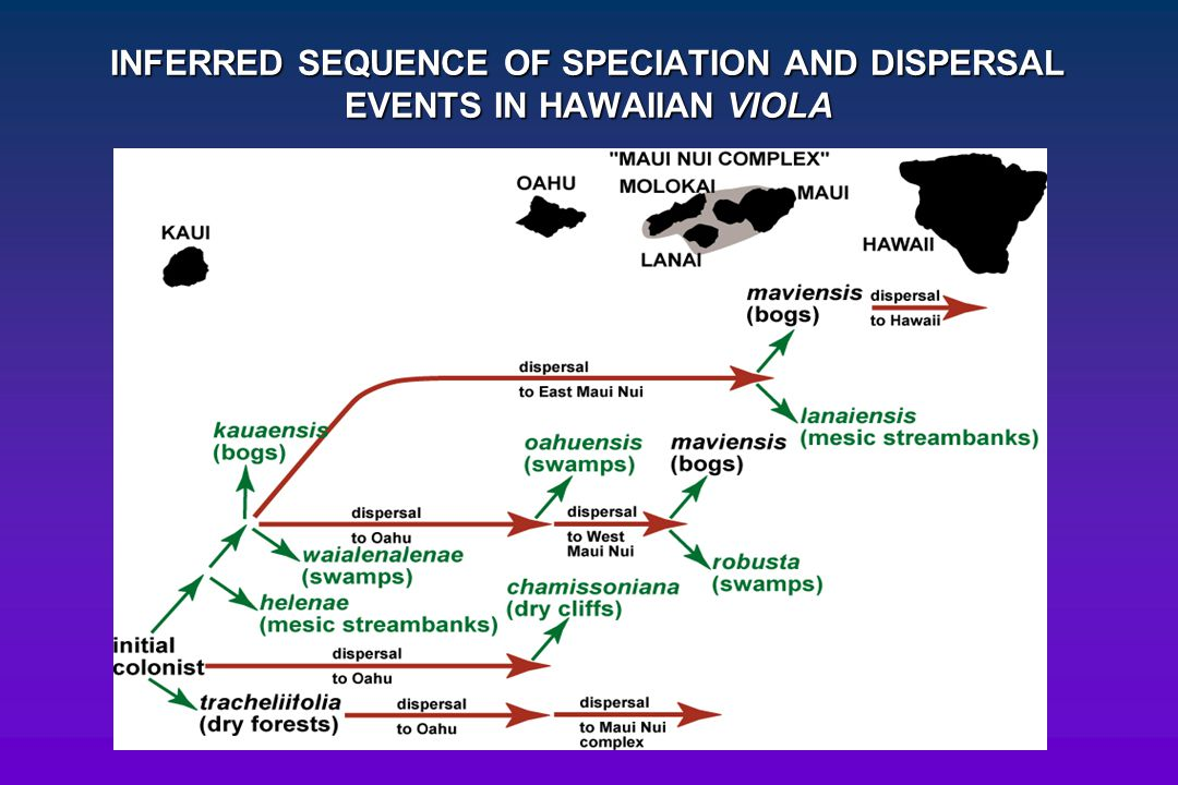 INFERRED SEQUENCE OF SPECIATION AND DISPERSAL EVENTS IN HAWAIIAN VIOLA