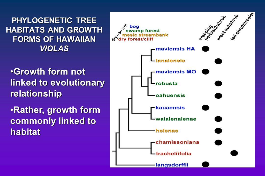 PHYLOGENETIC TREE HABITATS AND GROWTH FORMS OF HAWAIIAN VIOLAS