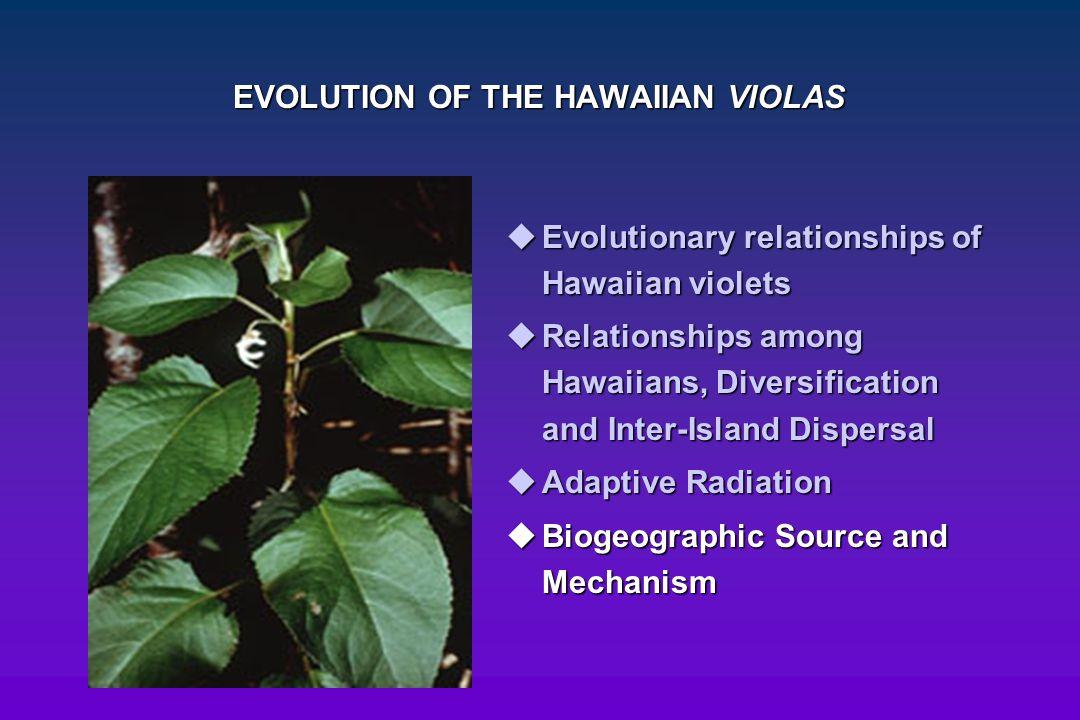 EVOLUTION OF THE HAWAIIAN VIOLAS