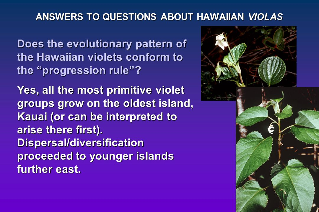 ANSWERS TO QUESTIONS ABOUT HAWAIIAN VIOLAS