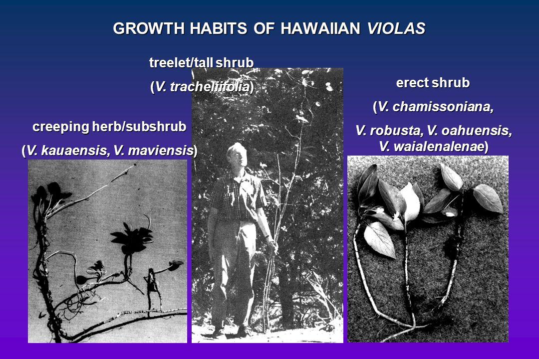 GROWTH HABITS OF HAWAIIAN VIOLAS