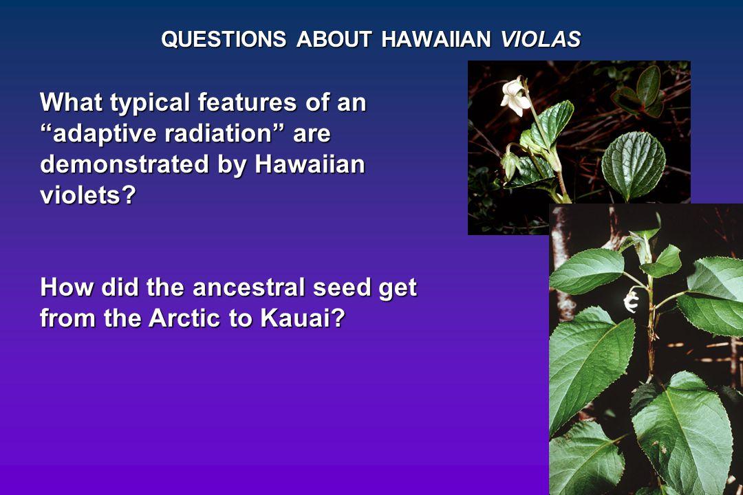 QUESTIONS ABOUT HAWAIIAN VIOLAS