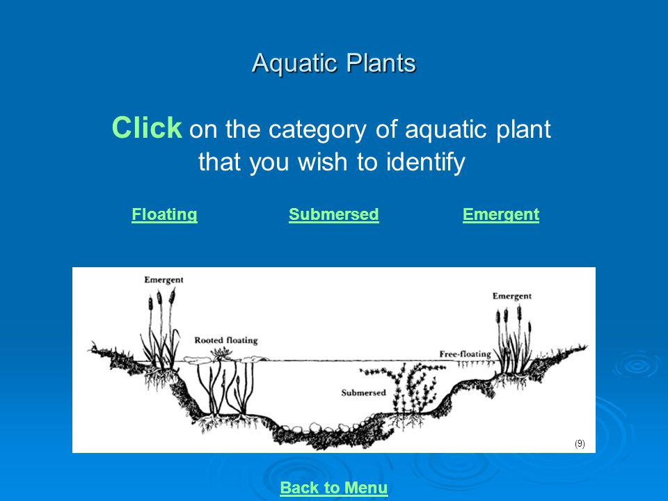 Click on the category of aquatic plant that you wish to identify