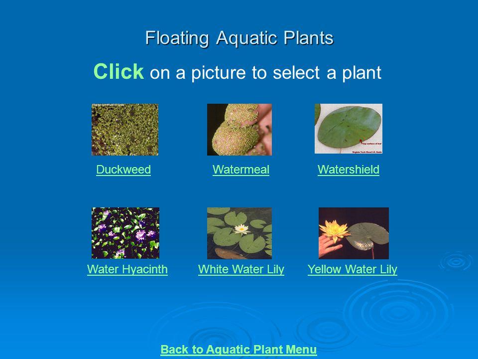 Floating Aquatic Plants