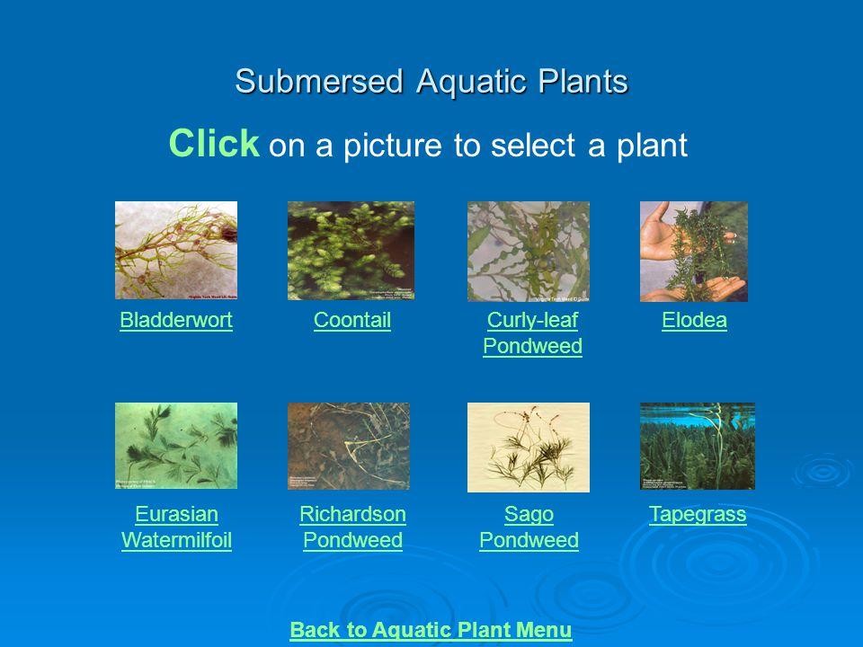 Submersed Aquatic Plants