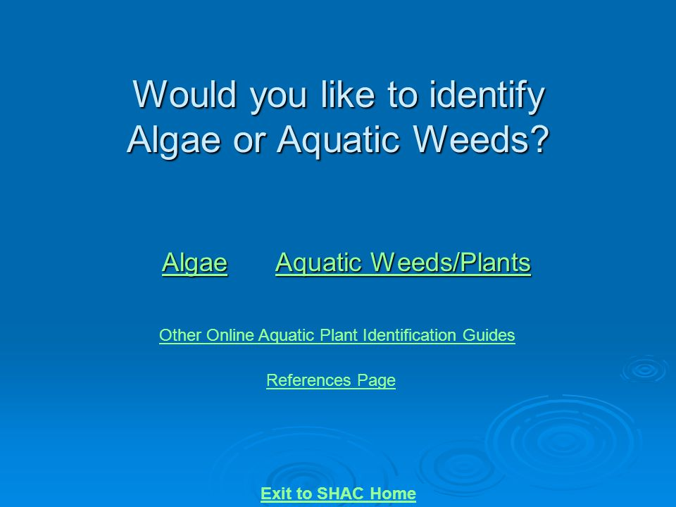Would you like to identify Algae or Aquatic Weeds