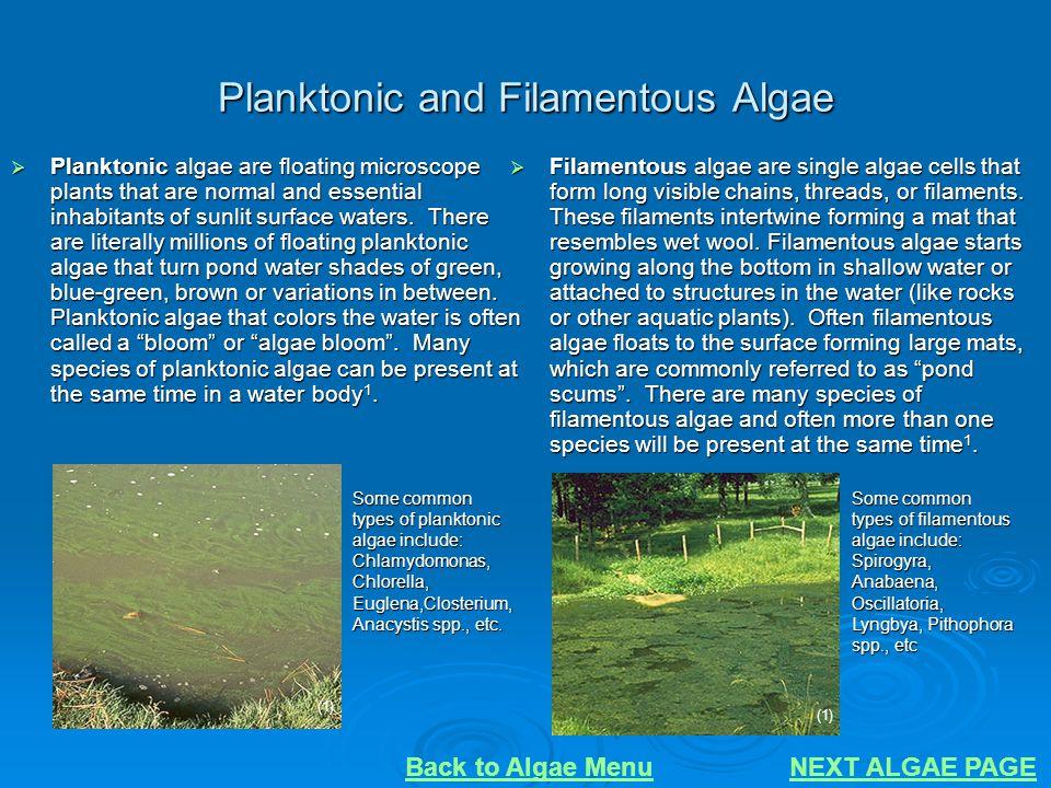 Planktonic and Filamentous Algae