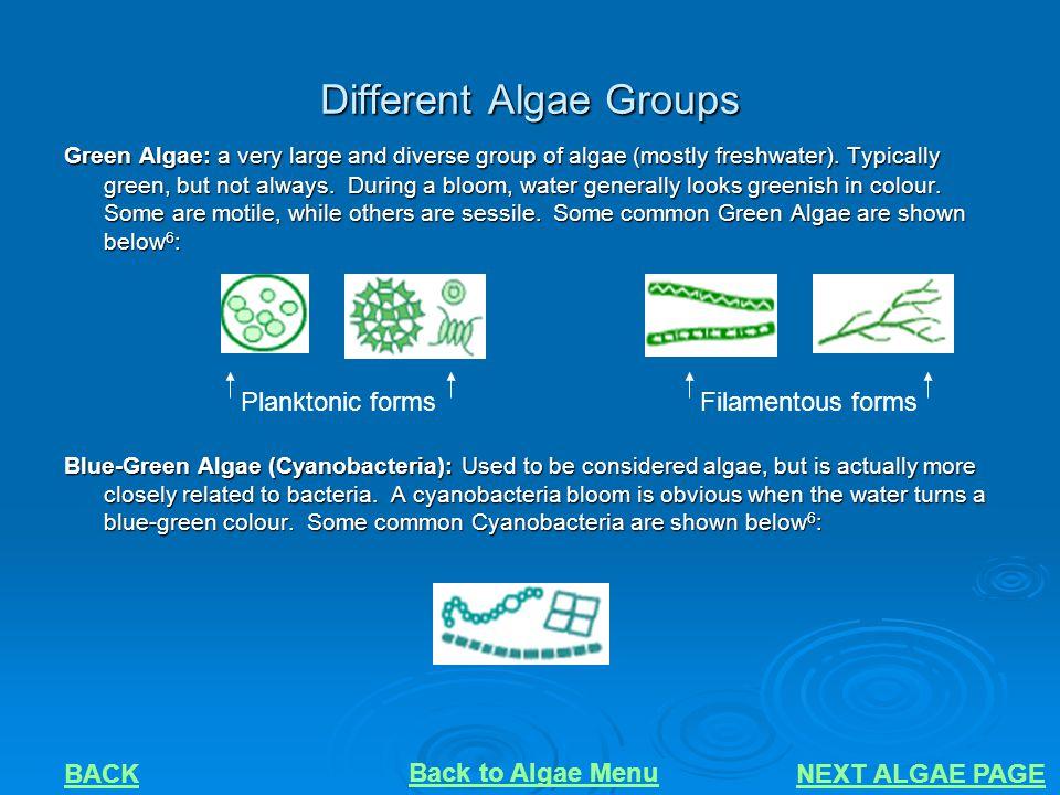 Different Algae Groups