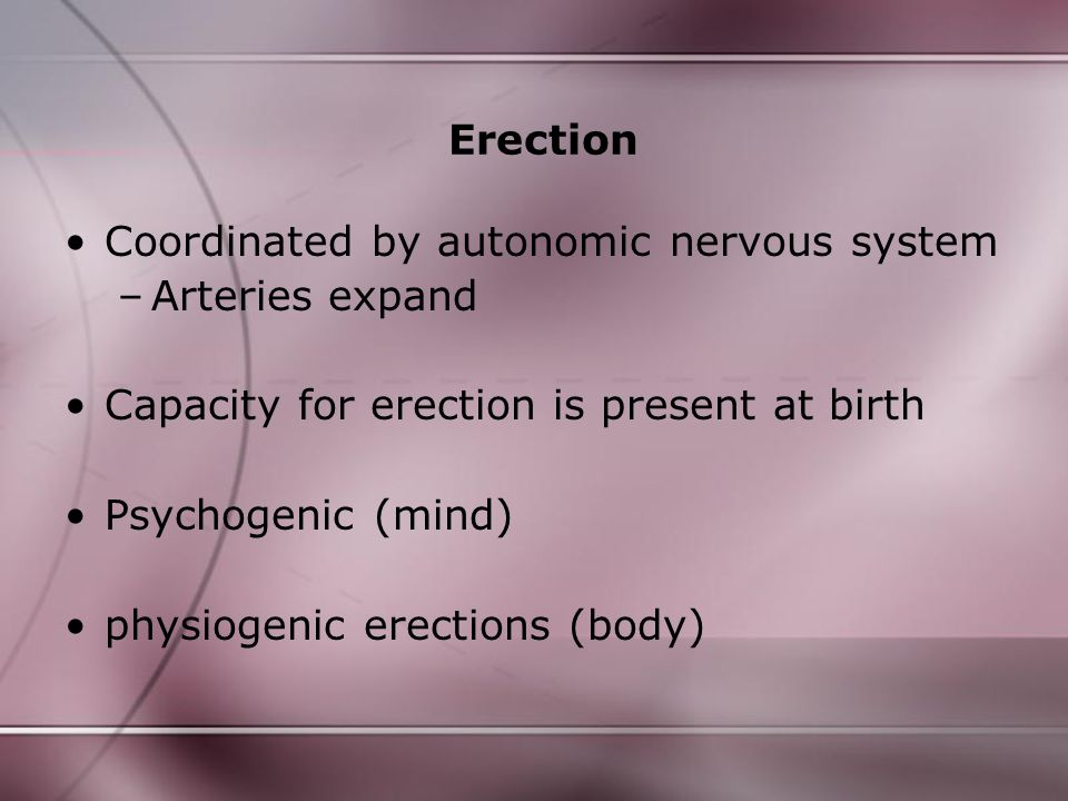 Erection Coordinated by autonomic nervous system. Arteries expand. Capacity for erection is present at birth.