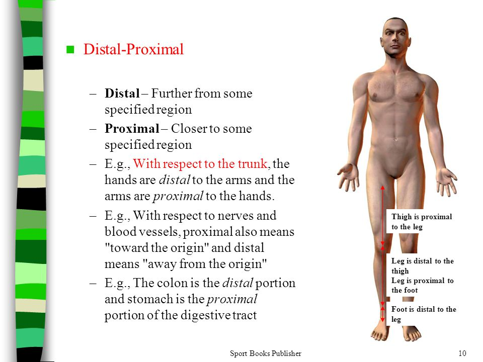 Distal-Proximal Distal – Further from some specified region
