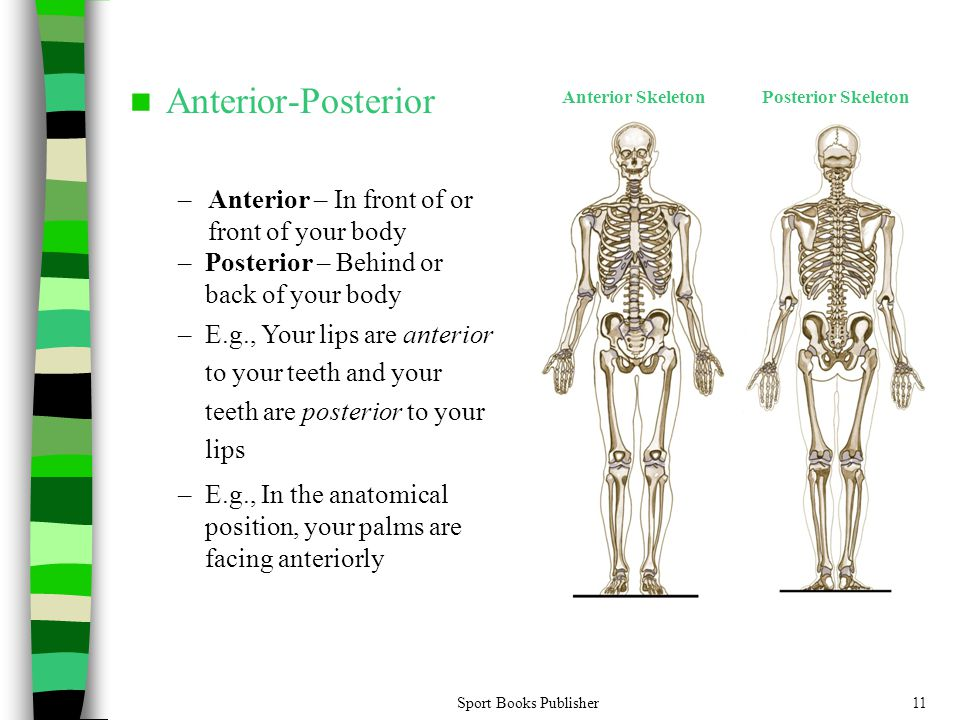 Anterior-Posterior Anterior – In front of or front of your body