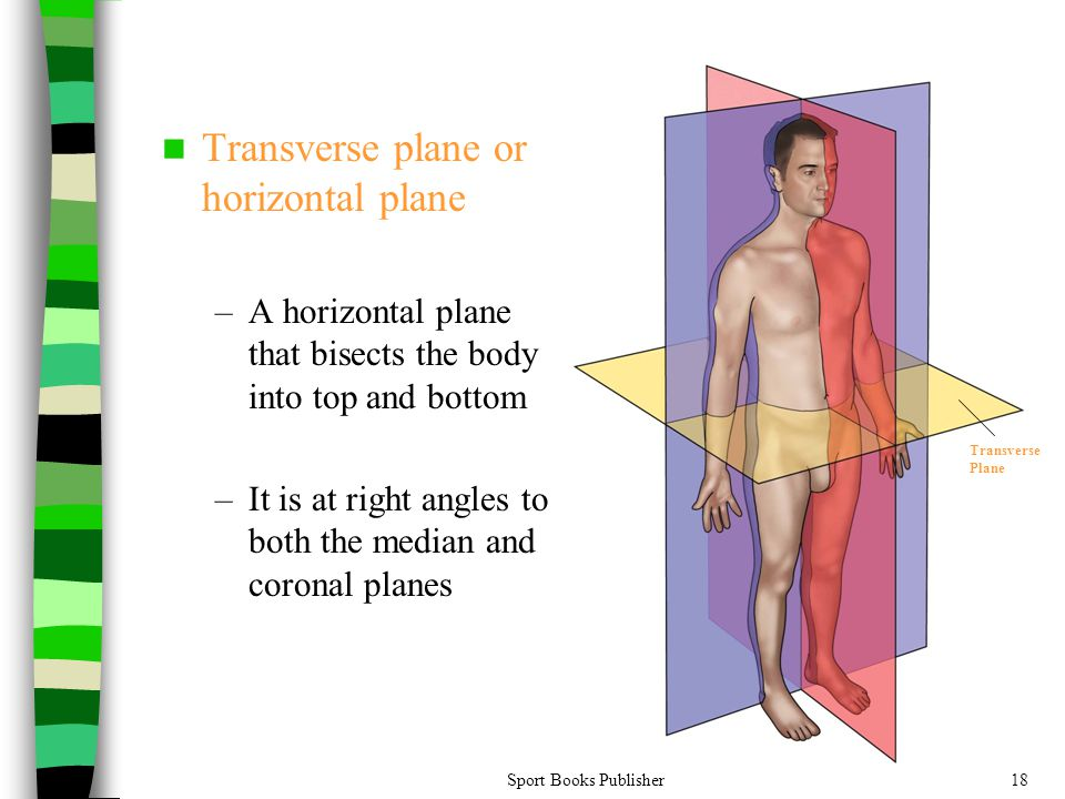 Transverse plane or horizontal plane