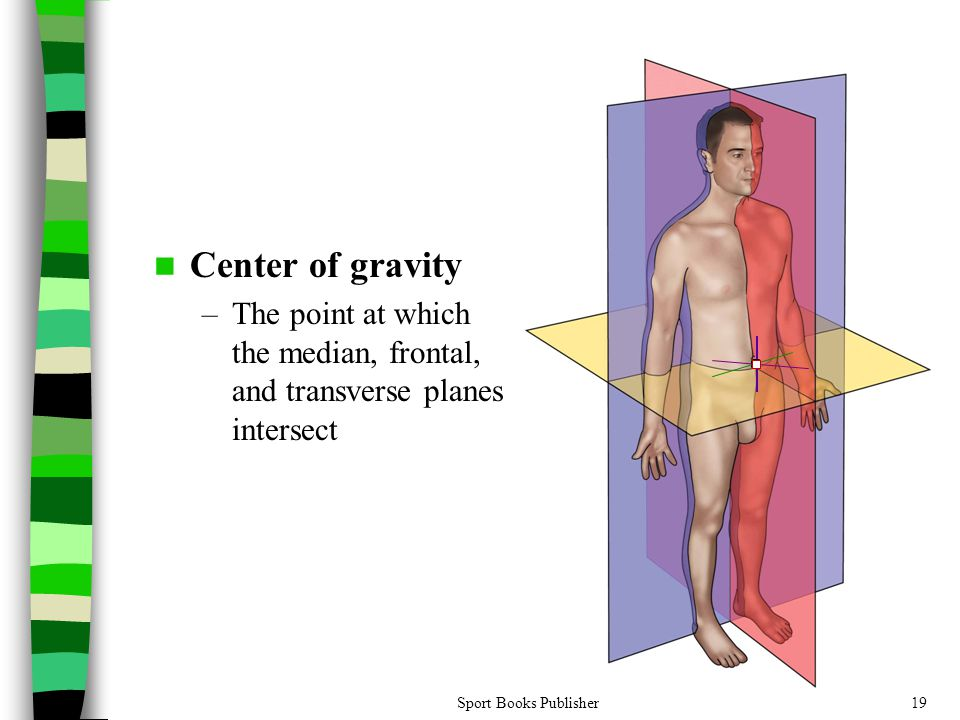 Center of gravity The point at which the median, frontal, and transverse planes intersect.