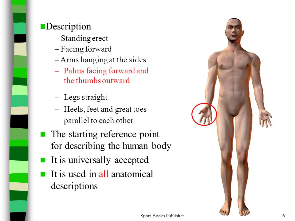 The starting reference point for describing the human body
