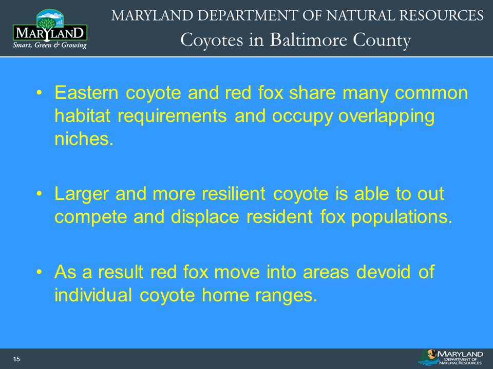 Eastern coyote and red fox share many common habitat requirements and occupy overlapping niches.