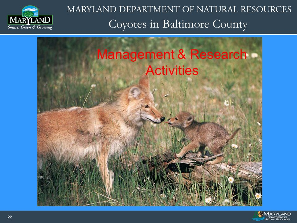 Management & Research Activities