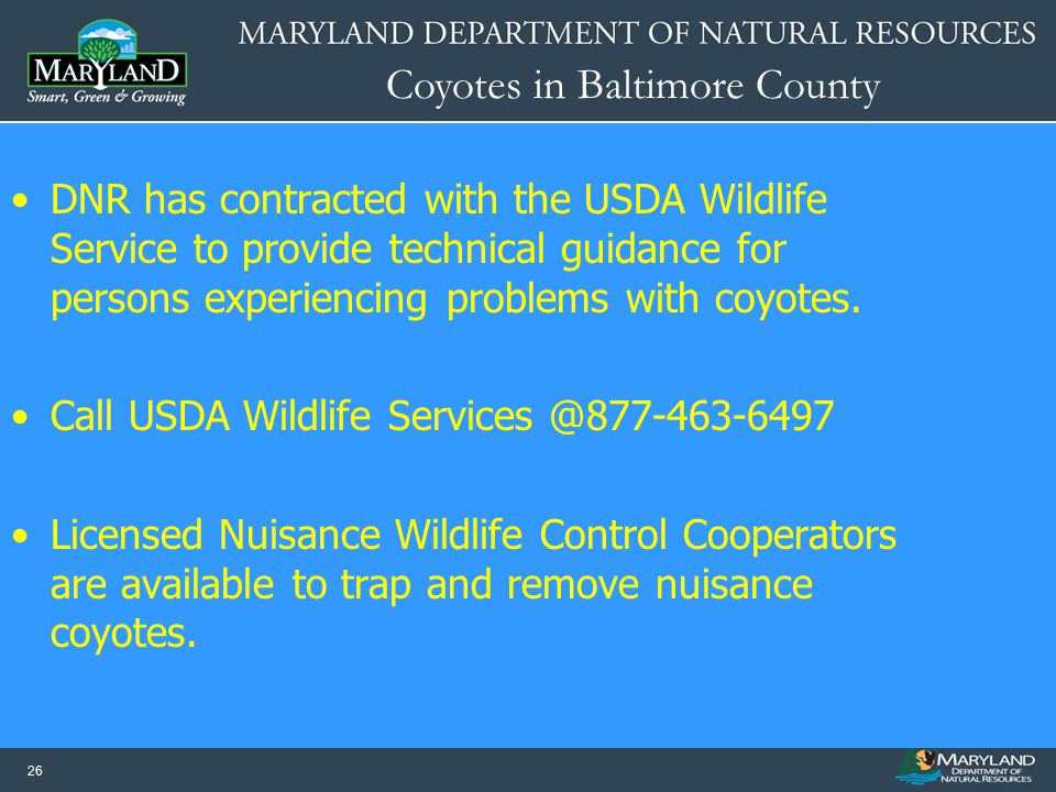 DNR has contracted with the USDA Wildlife Service to provide technical guidance for persons experiencing problems with coyotes.