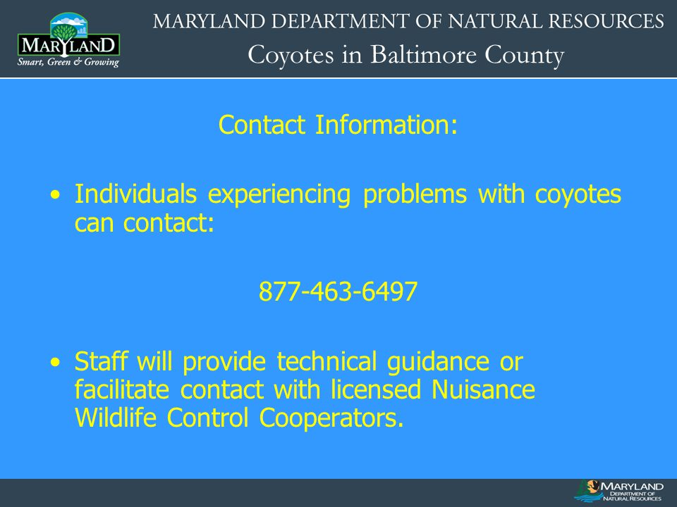Contact Information: Individuals experiencing problems with coyotes can contact: 877-463-6497.