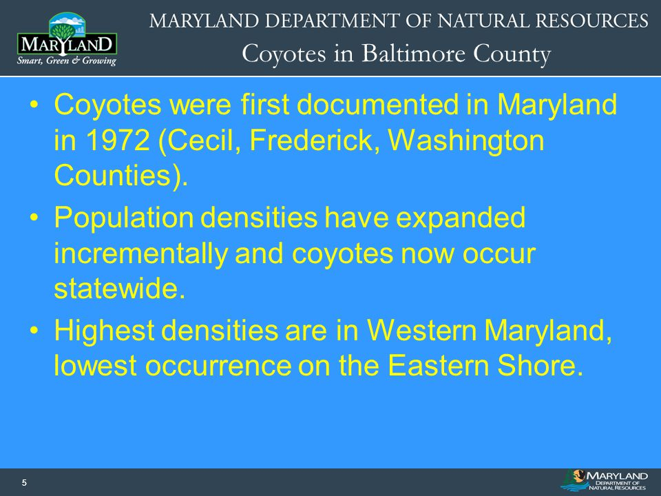 Coyotes were first documented in Maryland in 1972 (Cecil, Frederick, Washington Counties).