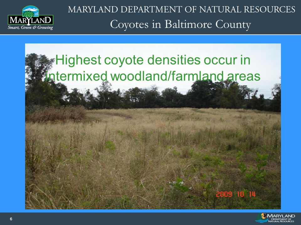 Highest coyote densities occur in intermixed woodland/farmland areas