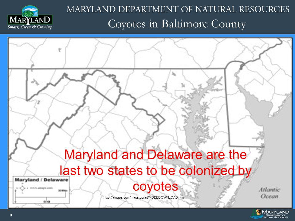 Maryland and Delaware are the last two states to be colonized by coyotes