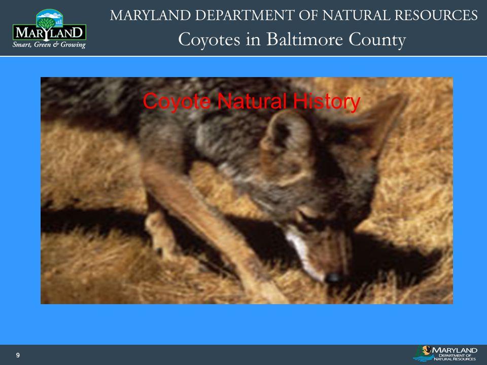 Coyote Natural History