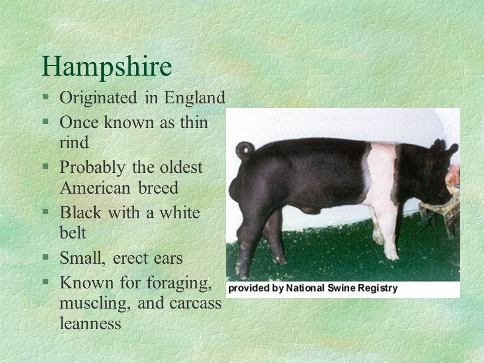 Hampshire Originated in England Once known as thin rind