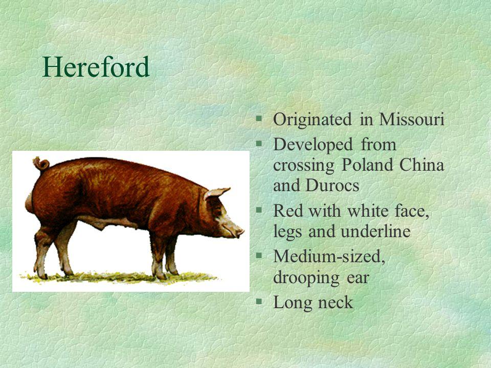 Hereford Originated in Missouri