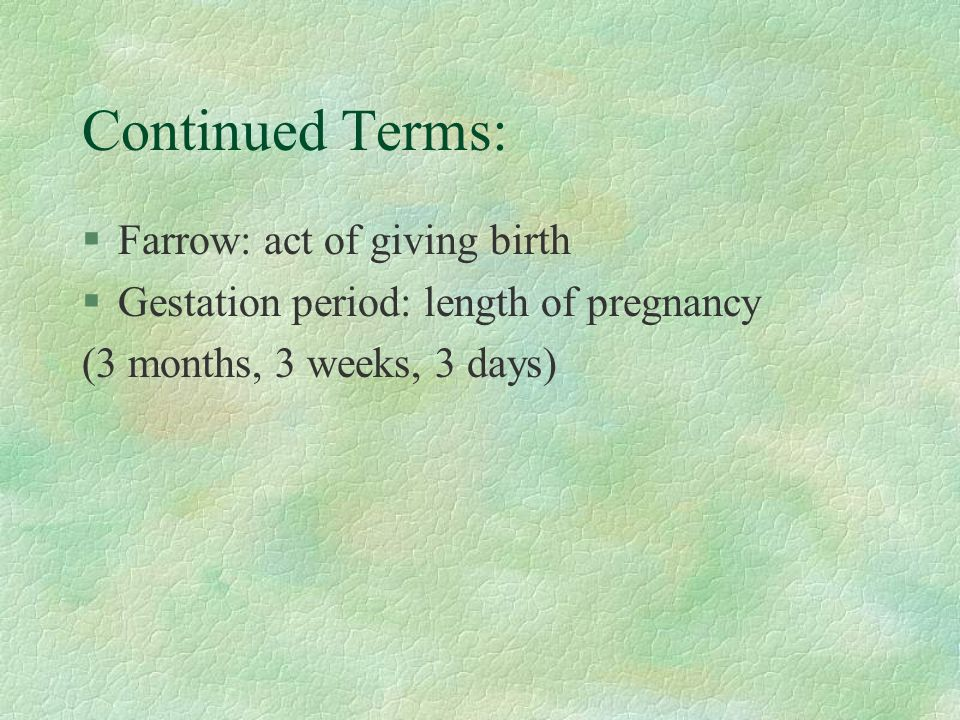 Continued Terms: Farrow: act of giving birth