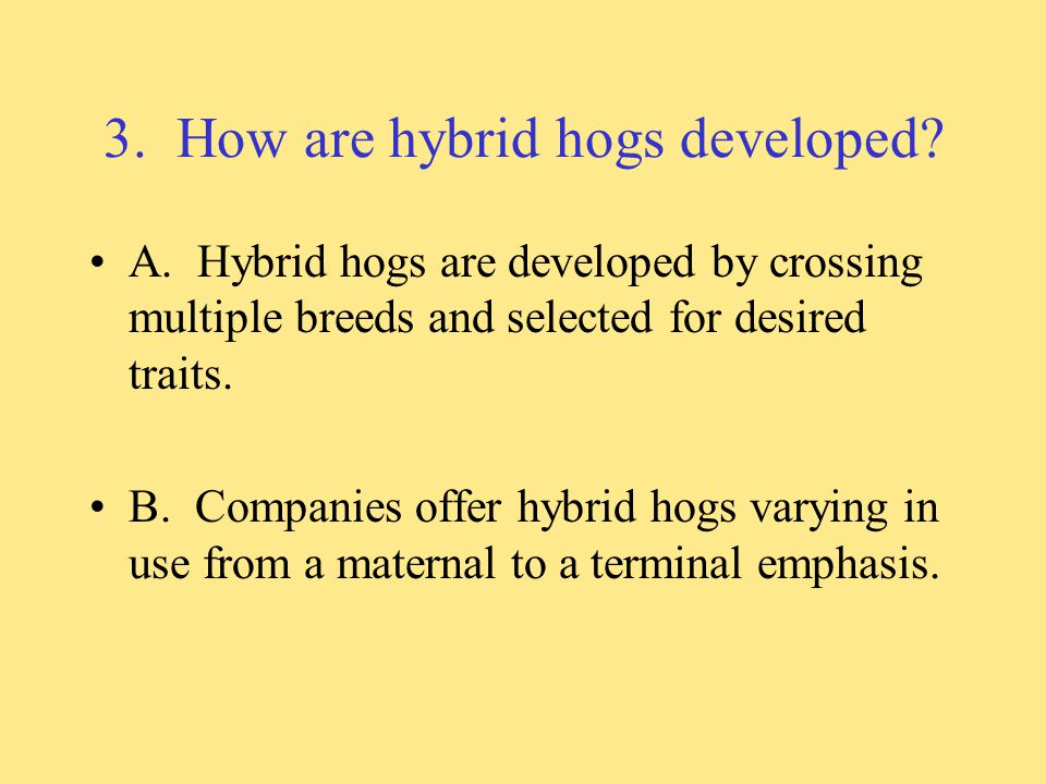 3. How are hybrid hogs developed
