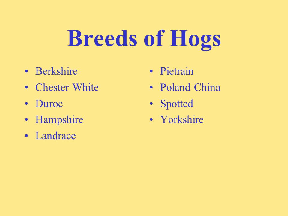 Breeds of Hogs Berkshire Chester White Duroc Hampshire Landrace