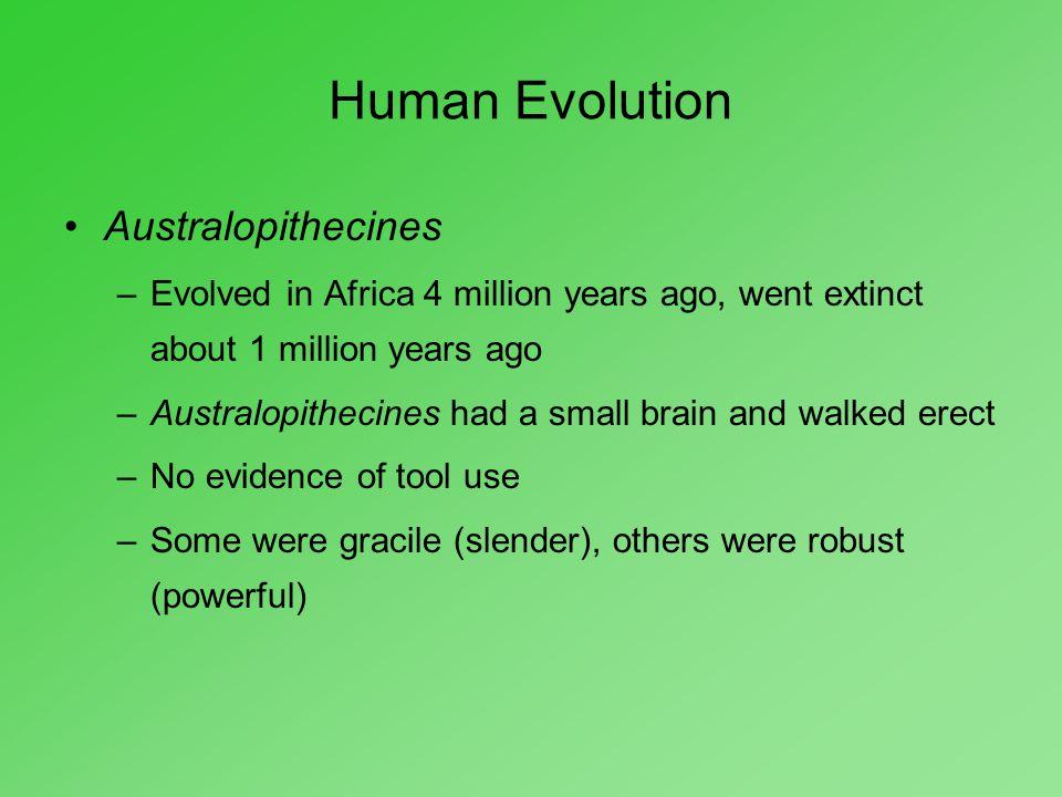 Human Evolution Australopithecines