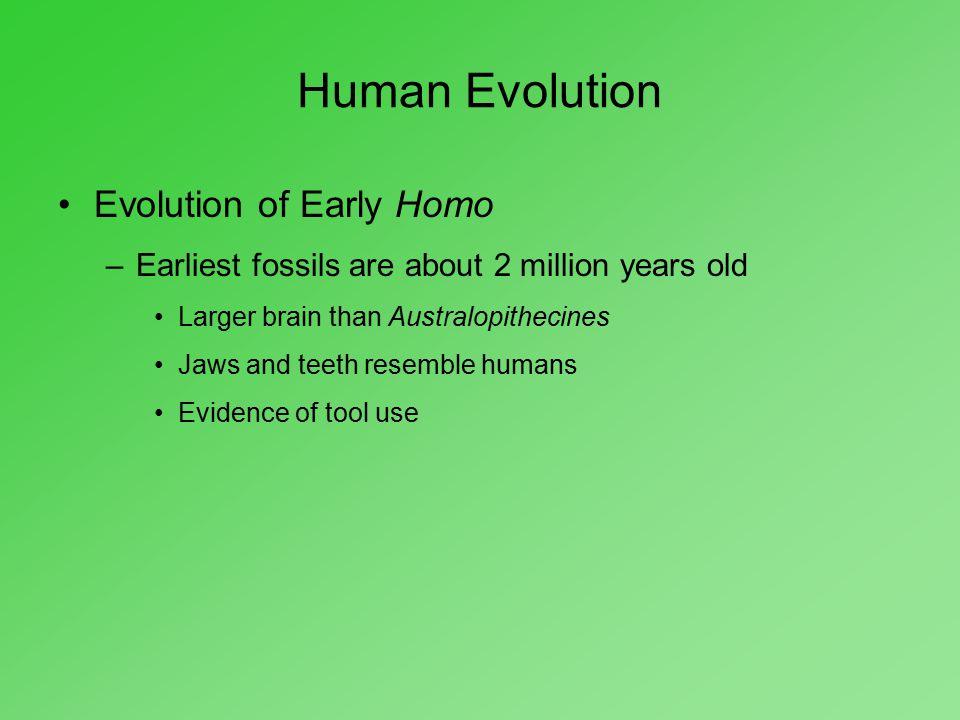 Human Evolution Evolution of Early Homo