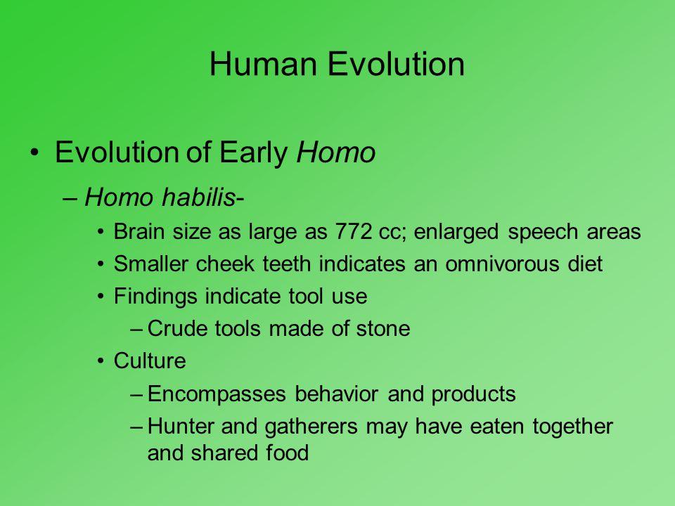 Human Evolution Evolution of Early Homo Homo habilis-