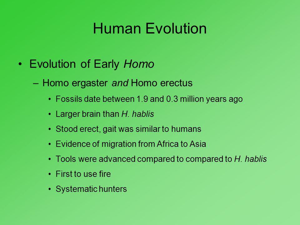 Human Evolution Evolution of Early Homo Homo ergaster and Homo erectus