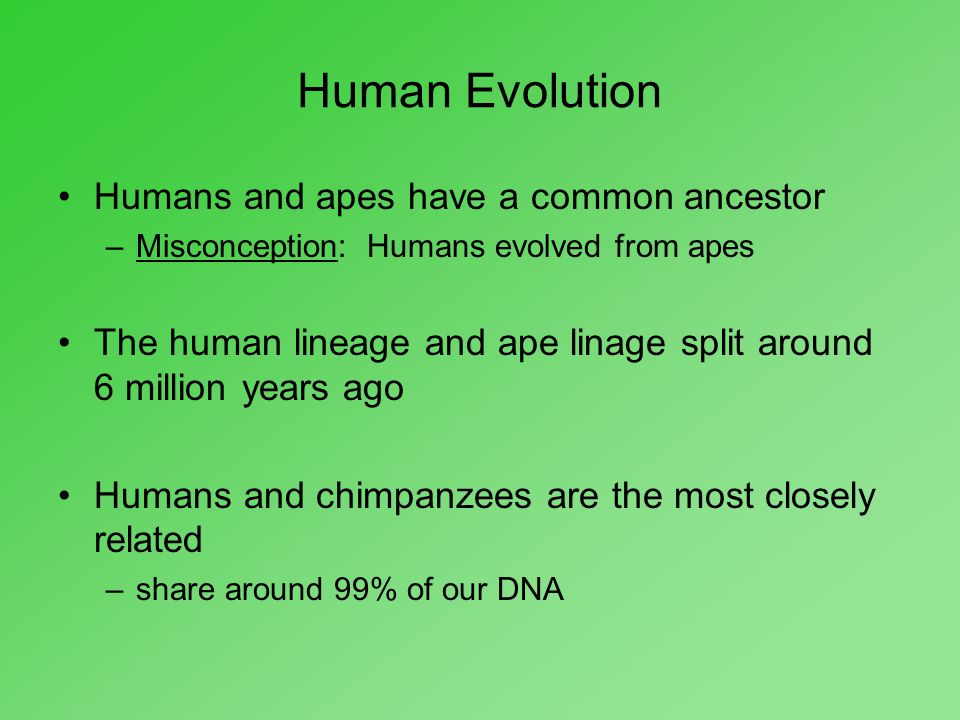 Human Evolution Humans and apes have a common ancestor