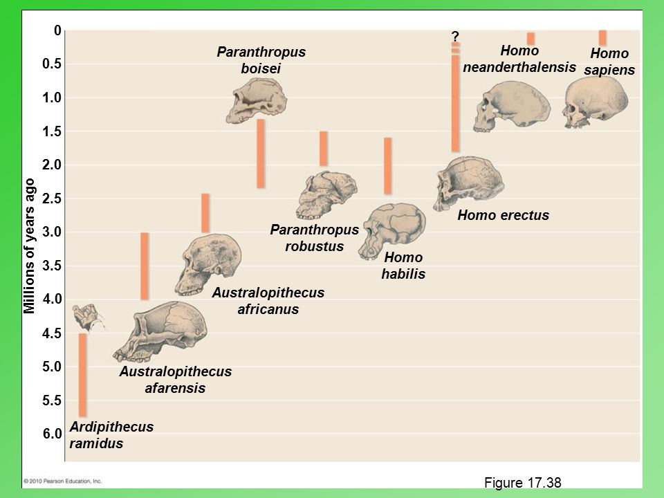Paranthropus boisei Homo neanderthalensis Homo sapiens 0.5 1.0 1.5