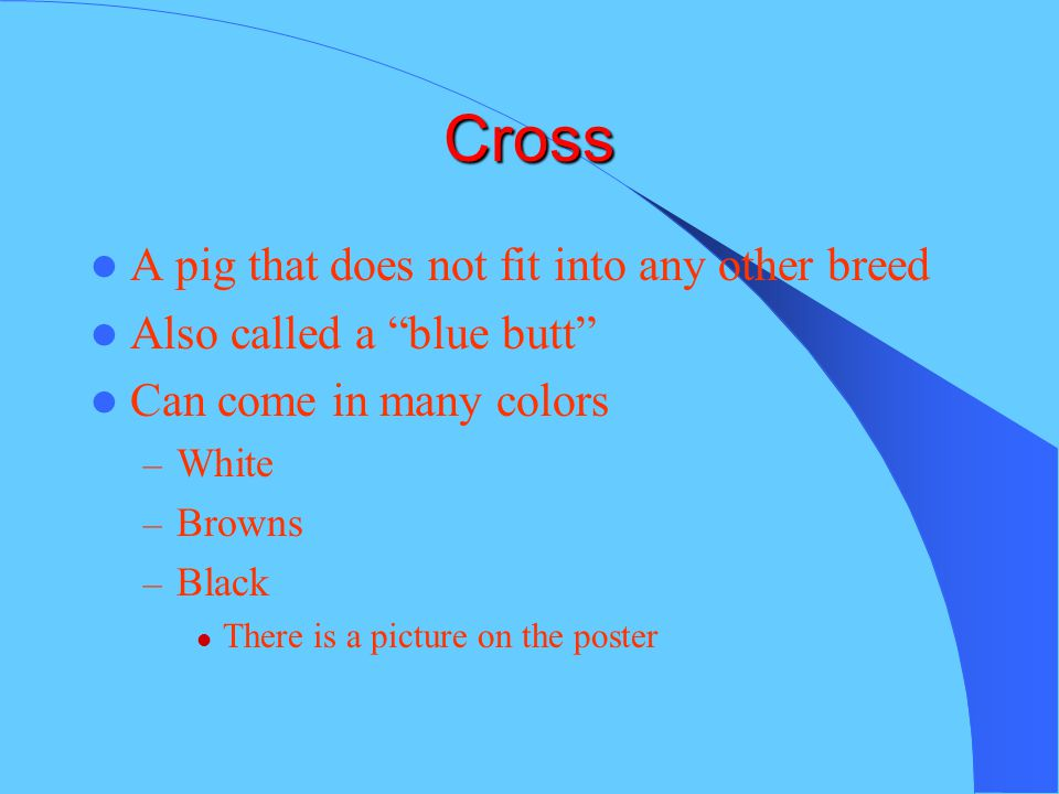 Cross A pig that does not fit into any other breed