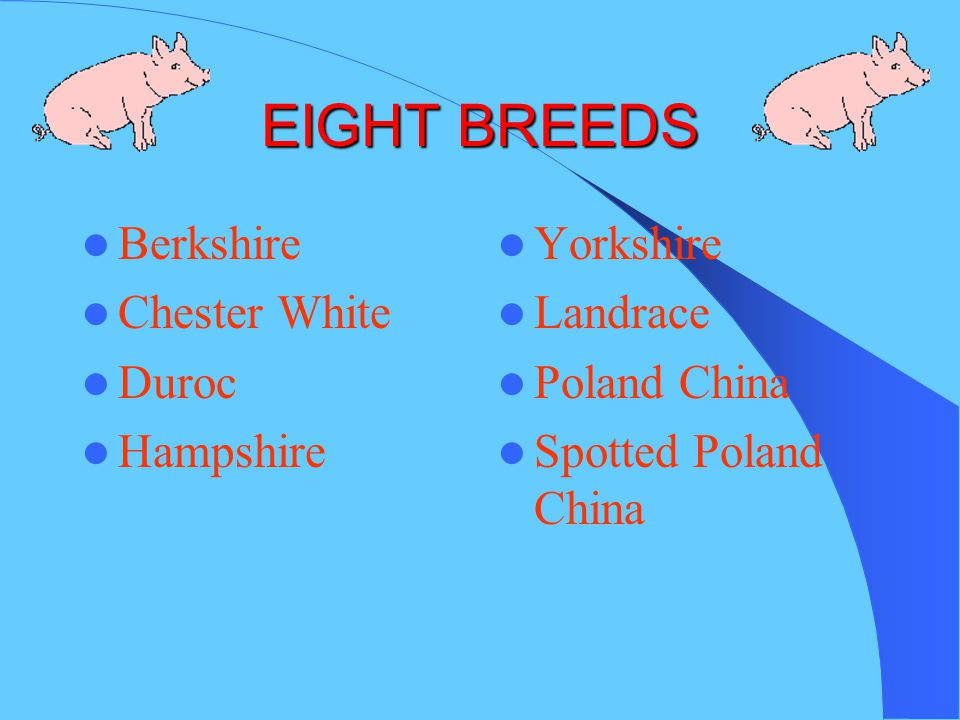 EIGHT BREEDS Berkshire Chester White Duroc Hampshire Yorkshire