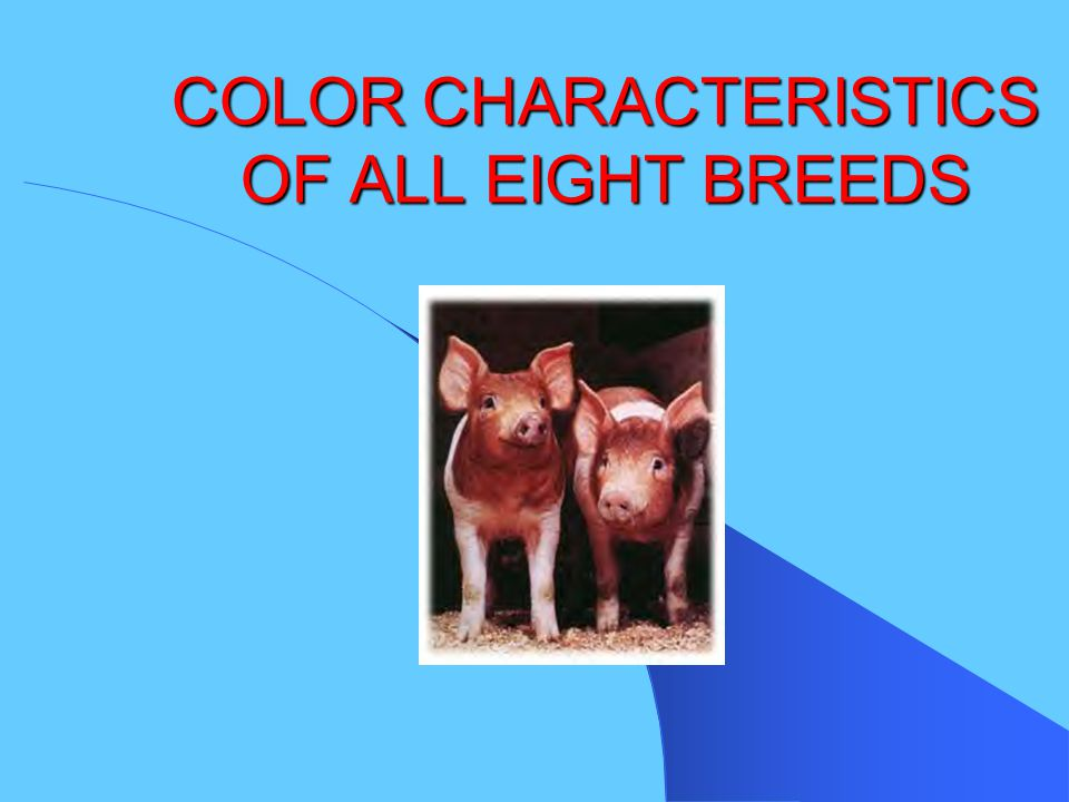 COLOR CHARACTERISTICS OF ALL EIGHT BREEDS