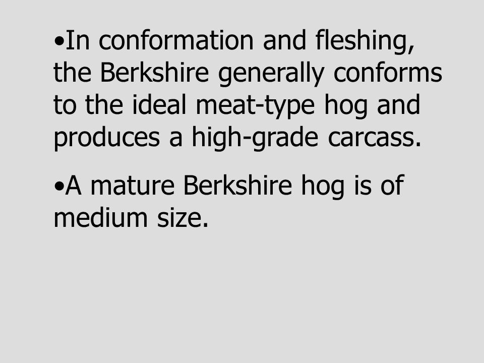 In conformation and fleshing, the Berkshire generally conforms to the ideal meat-type hog and produces a high-grade carcass.