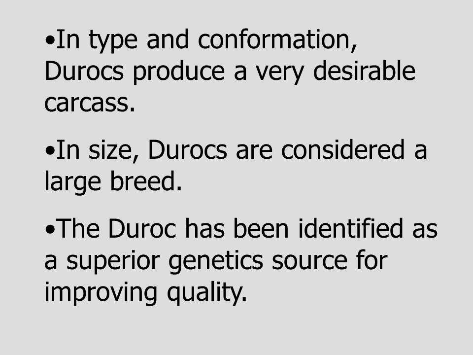 In type and conformation, Durocs produce a very desirable carcass.