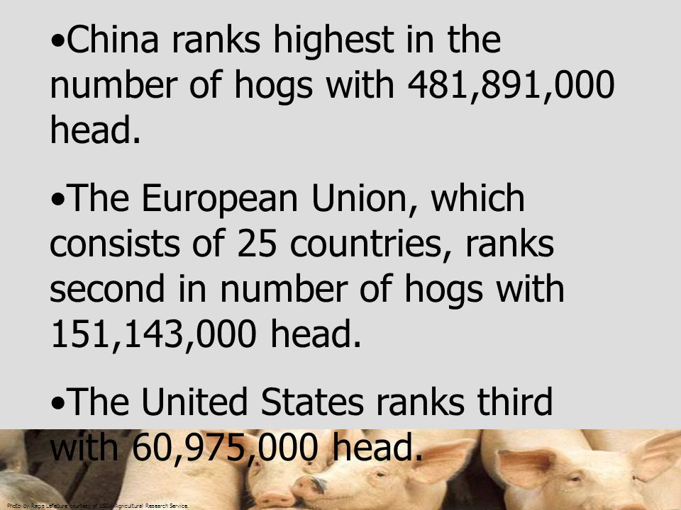 China ranks highest in the number of hogs with 481,891,000 head.