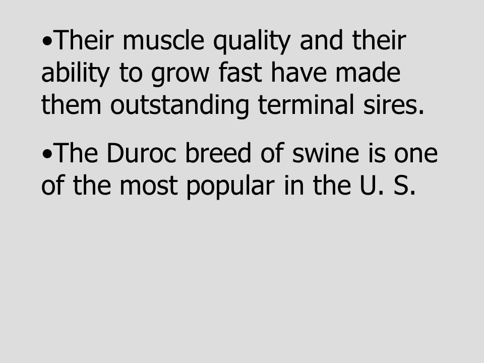 Their muscle quality and their ability to grow fast have made them outstanding terminal sires.